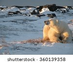 Polar Bear Watching Setting Su...