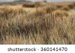 field of dry wild spikes ... | Shutterstock . vector #360141470