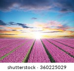 beautiful tulips field in the... | Shutterstock . vector #360225029