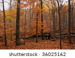 late fall foliage in the forest | Shutterstock . vector #36025162