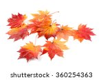 autumn maple leaves | Shutterstock . vector #360254363