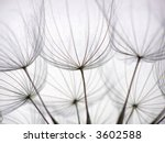 Close-up of dandelion seed with an abstract touch - stock photo