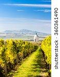 chapel with vineyard near velke ... | Shutterstock . vector #360361490