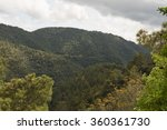 Coniferous Forests On The Slopes