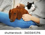 Stock photo woman with cute dachshund puppy and cat on plaid background 360364196