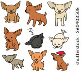 vector set of dog  chihuahua | Shutterstock .eps vector #360403508