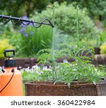 protecting tomato plants from...   Shutterstock . vector #360422984