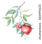 hand drawn watercolor botanical ... | Shutterstock . vector #360495623