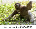 three toed sloth sitting on... | Shutterstock . vector #360541730