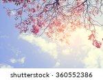 Nature Background Of Beautiful...