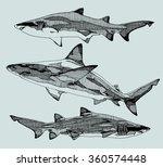 hand drawn sharks. vector...   Shutterstock .eps vector #360574448