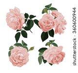 vector illustration of rose... | Shutterstock .eps vector #360600944