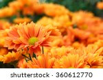 it is orange flowers with... | Shutterstock . vector #360612770