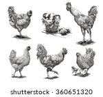 roosters  hens and chickens | Shutterstock .eps vector #360651320