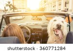 Woman And Her Dog Driving On...