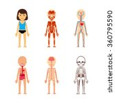 female body anatomy.... | Shutterstock .eps vector #360795590