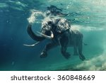 swimming elephant underwater.... | Shutterstock . vector #360848669
