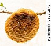 honeycomb isolated | Shutterstock . vector #360862640
