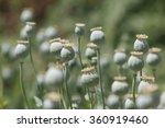 poppy | Shutterstock . vector #360919460