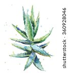 aloe vera. watercolor succulent ... | Shutterstock . vector #360928046