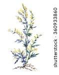 common wormwood  watercolor... | Shutterstock . vector #360933860