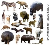 hippo and other african animals.... | Shutterstock . vector #360952070