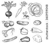 vegetables set. hand drawn... | Shutterstock . vector #360959048