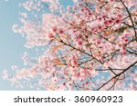 pink cherry blossom flower | Shutterstock . vector #360960923