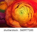 Red Flower Orange Flower Yello...