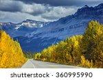 Bright Yellow Aspen And Birch...