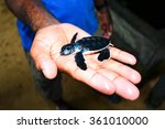 Small Sea Turtle On Hand At...