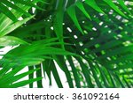 Green Palm Leaves  Closeup