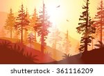 west coast forest in warm... | Shutterstock .eps vector #361116209