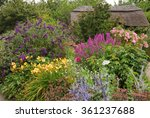 Purple Loosestrife  Lythrum...