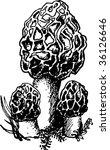 vector illustration of mushroom | Shutterstock .eps vector #36126646