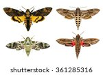 moths species. daphnis nerii ... | Shutterstock . vector #361285316