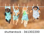Stock photo funny group of american staffordshire terrier puppies with little red cat hanging on a clothesline 361302200
