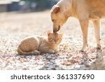 Stock photo dog and cat playing together outdoor 361337690