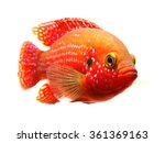 the african jewelfish ... | Shutterstock . vector #361369163