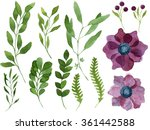 set of watercolor leaves ... | Shutterstock . vector #361442588