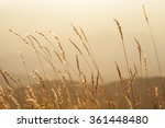 meadow in sunsets on the... | Shutterstock . vector #361448480