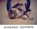 Stock photo the domestic multi colored kitten kitten plays on a floor 361470878