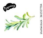 rosemary watercolor...   Shutterstock . vector #361527704