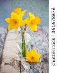 Beautiful Yellow Daffodils In ...