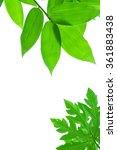 leaves on white background. | Shutterstock . vector #361883438