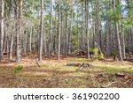 forest conservation on the big... | Shutterstock . vector #361902200