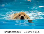 golden retriever puppy exercise ... | Shutterstock . vector #361914116