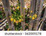 Driftwood Fenced Beach Flowers