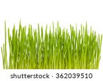 growing green grass | Shutterstock . vector #362039510