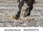 Horse Legs In The Dirty Water